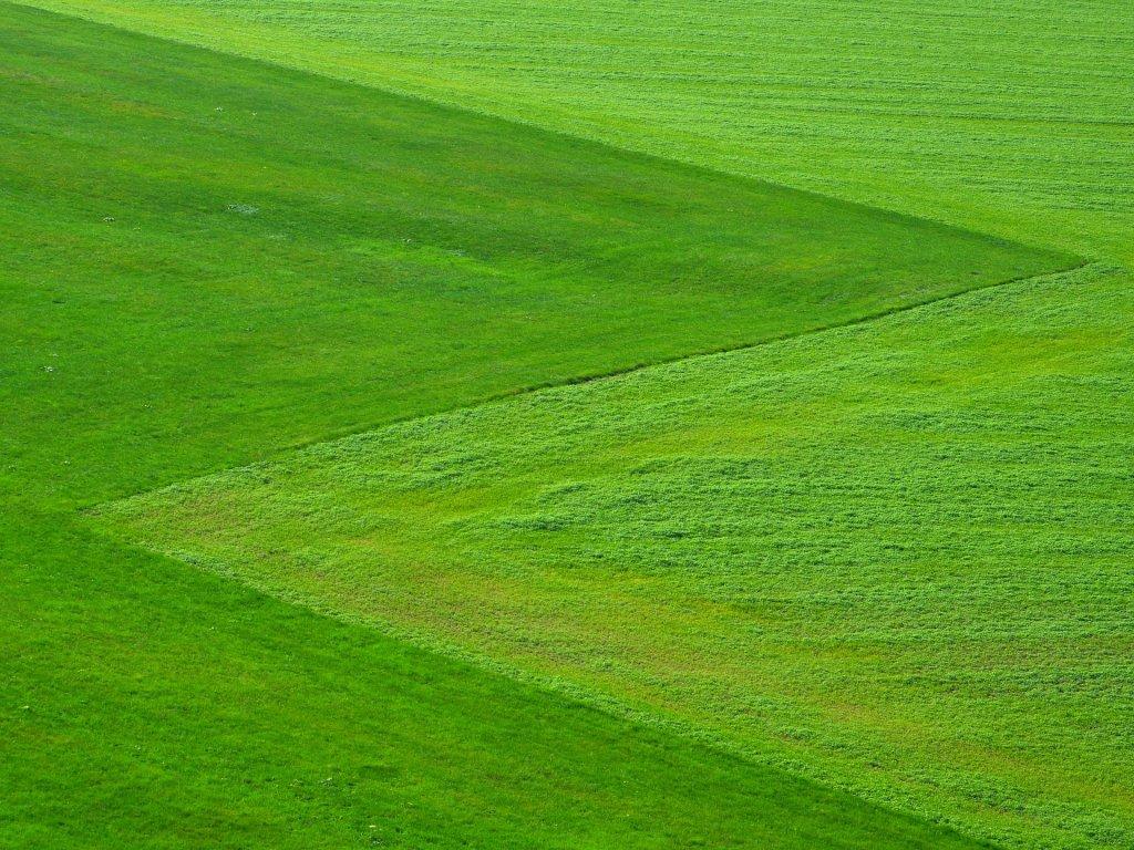 Graszoden breed